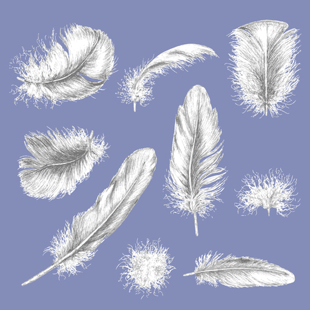 bird flying: Hand drawn set of various feathers.