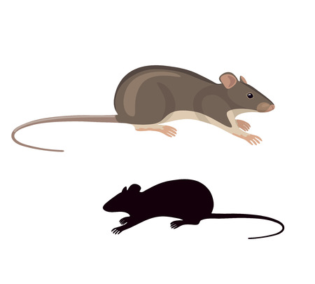 cartoon mouse: Simplified colored image and silhouette of field mouse isolated on white background.