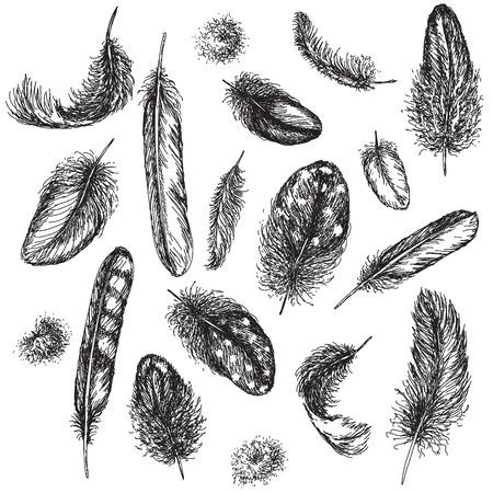 fondo blanco y negro: dibujado a mano conjunto de varias plumas.