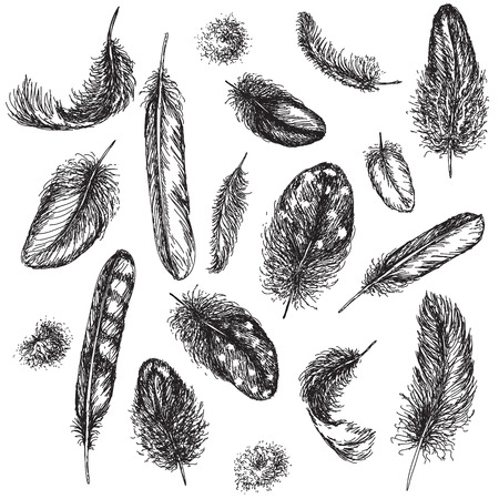 scattered on white background: Hand drawn set of various feathers.