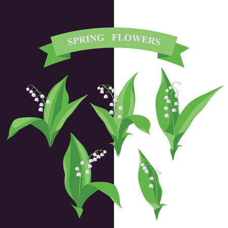 simplified: Simplified image of spring flower. Lily of the valley flowers set isolated on dark and white background. Illustration