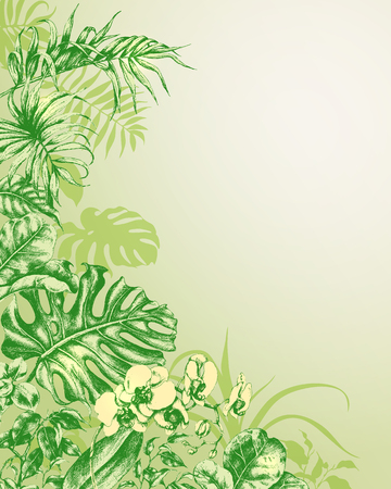 tropical plants: Hand drawn branches and leaves of tropical plants. Natural  background with tropical plants. Illustration