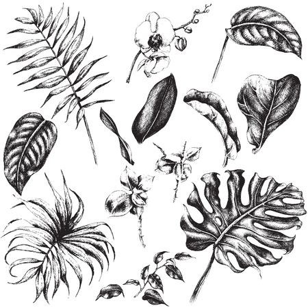 Hand drawn branches and leaves of tropical plants.  イラスト・ベクター素材