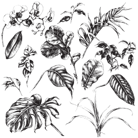 flores exoticas: Dibujado a mano ramas y hojas de plantas tropicales.