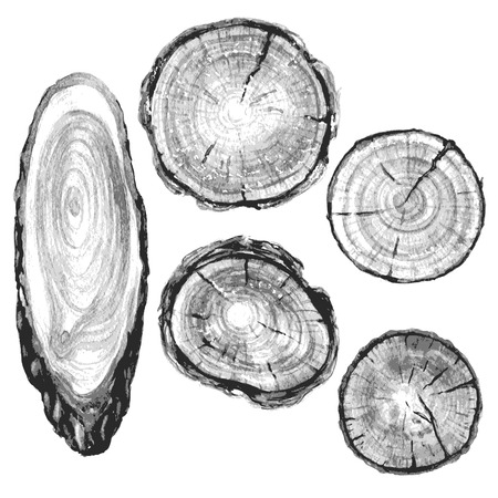 Round and oval cross section of tree trunk. Wooden texture with tree rings. Hand drawn gray  tree trunk rings isolated on white. Ilustração