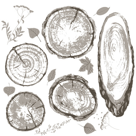 Round and oval cross section of tree trunk. Wooden texture with tree rings. Hand drawn gray  tree trunk rings and leaves isolated on white.