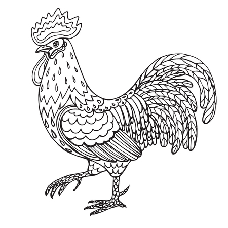 feathering: rooster isolated on white. Black and white contoured illustration for coloring. Illustration