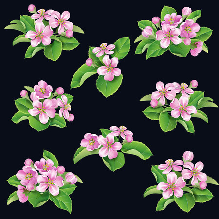 flower blooming: Bunches of pink flower trees blooming and green leaves  isolated on black background. Illustration