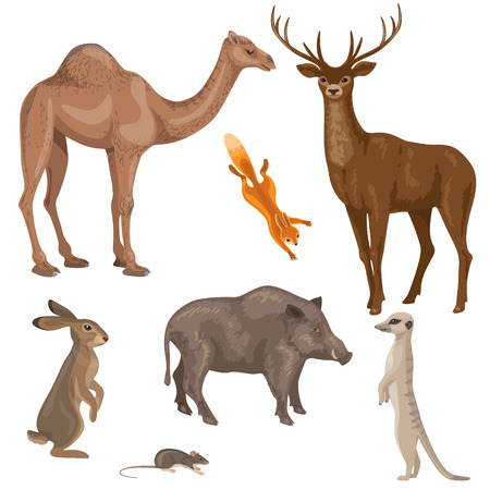 mammals: Set of different mammals animals isolated on white. Animals of forest, desert and steppe zones. Simplified images of wild animals.