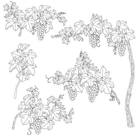Hand Gezeichnet Von Doodle Wildblumen Gesetzt. Schwarze Und Weiße ...