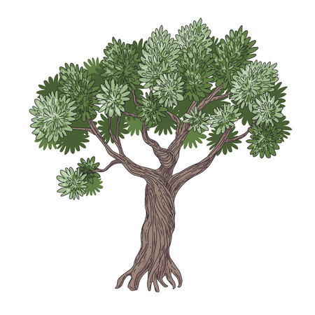 simplified: Simplified cartoon image of Olive Tree isolated on white.