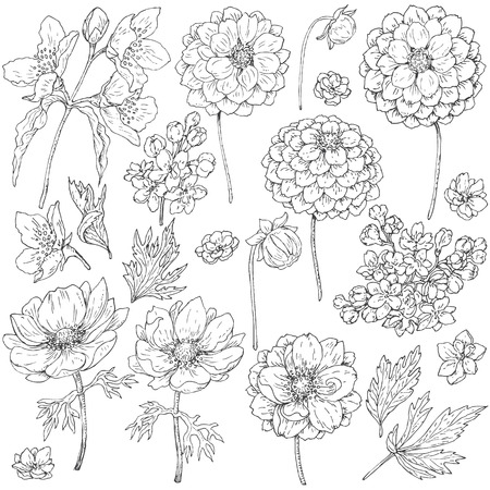 hand set: Hand drawn set of doodle flowers. Black and white flowers, buds and leaves for coloring. Floral elements for decoration. Vector sketch. Illustration