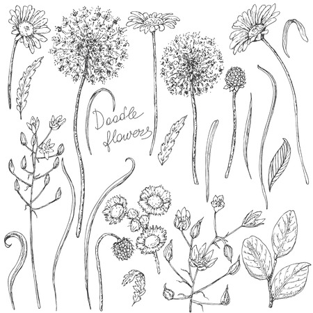 Hand drawn set of doodle wildflowers. Black and white flowers, buds and leaves for coloring. Floral elements for decoration. Vector sketch. Illustration