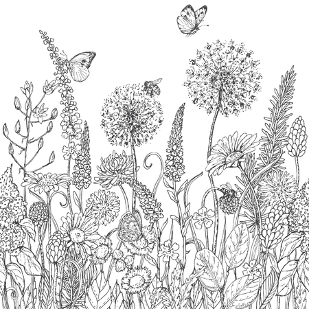 bee on white flower: Hand drawn seamless line pattern with wildflowers and insects. Black and white doodle wild flowers, bees and butterflies for coloring. Floral elements for decoration. Vector sketch.