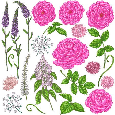 petites fleurs: Hand Drawn ensemble de fleurs. roses roses, petites fleurs, des bourgeons et des feuilles vertes isolé sur blanc. éléments floraux pour la décoration. Vector croquis. Illustration