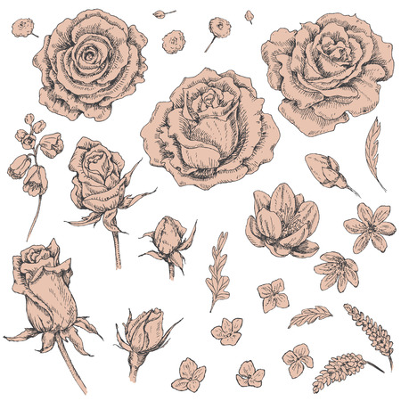 beige: Hand drawn set of beige flowers isolated on white. Floral elements for decoration. Vector sketch. Illustration