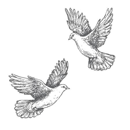 blanco: dibujado a mano par de palomas volando aisladas sobre fondo blanco. Imagen blanco y negro. Dos palomas de dibujo vectorial. Vectores