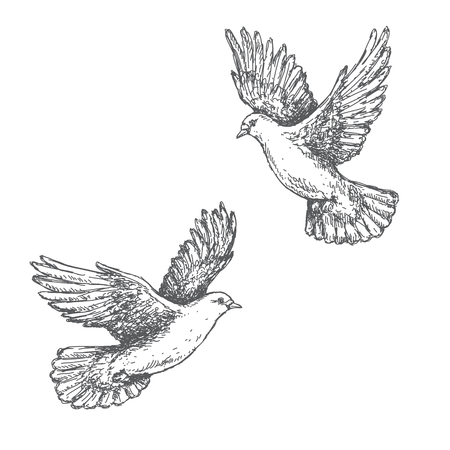 black outline: Hand drawn pair of flying doves isolated on white background. Black and white image. Two pigeons vector sketch.