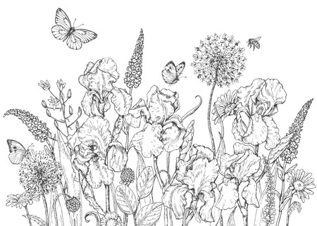 iris flower: Hand drawn line illustration with iris, wildflowers and insects. Black and white doodle wild flowers, bees and butterflies. Monochrome floral elements. Coloring page. Vector sketch.