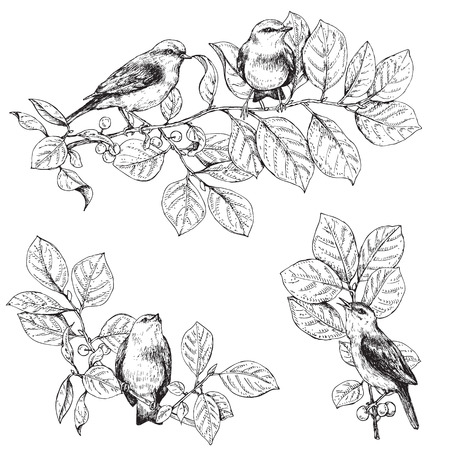 warble: Hand drawn birds sitting on branches.  Monochrome set of songbirds. Black and white elements for coloring.