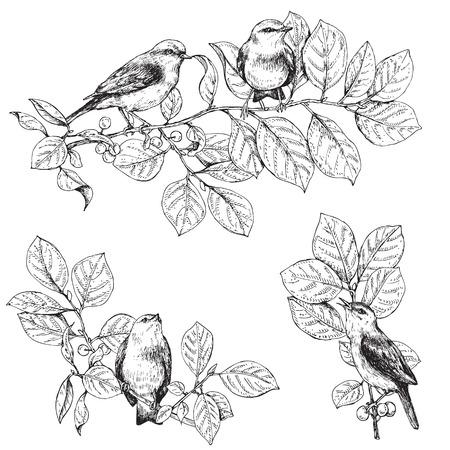 Hand getrokken vogels zittend op takken. Monochrome set van zangvogels. Zwarte en witte elementen voor het kleuren.