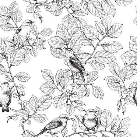 trill: Hand drawn birds sitting on branches with leaves and berries.  Black and white image  of songbirds. sketch.  Monochrome seamless pattern. Illustration