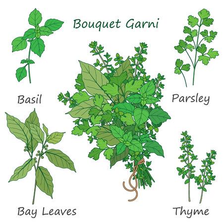 Mazzetto di timo, alloro, prezzemolo e basilico legato con una corda. Bundle di aromatizzanti erbe verdi isolati su bianco.