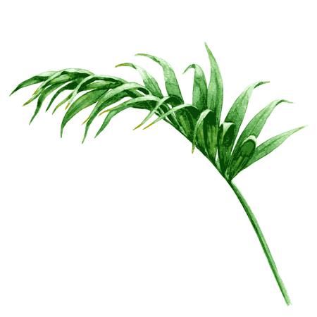 Hand getrokken tropische planten. Waterverf het palmblad. Groen blad dat op wit wordt geïsoleerd. Stockfoto - 63792162