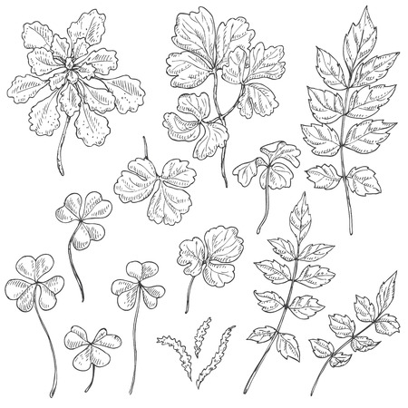 oxalis: Hand drawn set of different leaves. Black and white floral elements for coloring. Sketch.