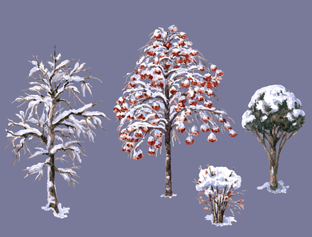 evergreen trees: Hand drawn watercolor illustration. Set of various winter trees and bushes. Evergreen and deciduous snow covered plants isolated on white. Trees and shrubs without leaves.