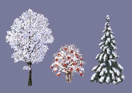 Hand drawn watercolor illustration. Set of various winter trees and bush. Evergreen and deciduous snow covered plants isolated on white. Trees and shrubs without leaves.