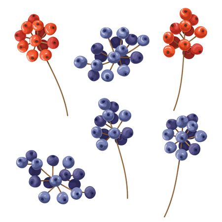 Set of red and blue berry bunches  isolated on white.