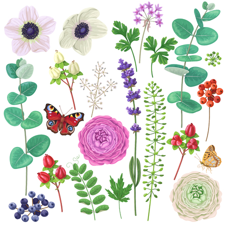 Colorful floral elements set. Flowers, leaves, berries and butterflies isolated on white. Bouquet components. Illustration