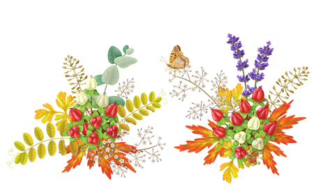 foliage: Colorful autumn bouquets with berries and butterfly isolated on white. Fall foliage and berry floral elements decoration. Illustration