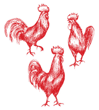feathering: Hand drawn animalistic illustration. Red roosters sketch.  Walking cocks set isolated on white. Illustration