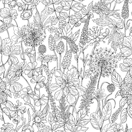 Hand drawn seamless pattern with wildflowers. Black and white doodle wild flowers and grass. Monochrome floral elements. Vector sketch. Illustration