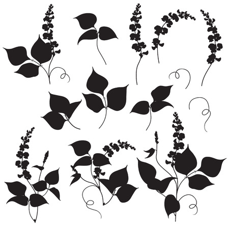 flowers bouquet: Set of floral elements legumes silhouette. Black shape of plants isolated on white. Illustration