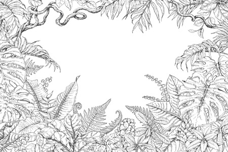 Hand drawn branches and leaves of tropical plants. Monochrome rectangle horizontal floral frame. Monstera, ficus, fern, liana, palm fronds sketch. Black and white illustration coloring page for adult.