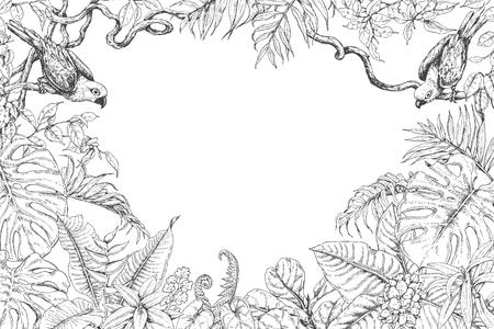 Hand getrokken takken en bladeren van tropische planten. Monochrome rechthoek horizontale bloemen frame met vogels zittend op liaan takken. Zwart en wit kleurplaat voor volwassen. Vector schets.