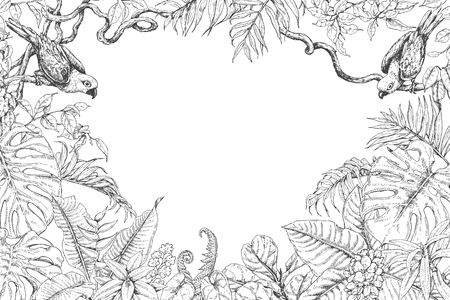 Hand drawn branches and leaves of tropical plants. Monochrome rectangle horizontal floral frame with birds sitting on liana branches. Black and white coloring page for adult. Vector sketch.