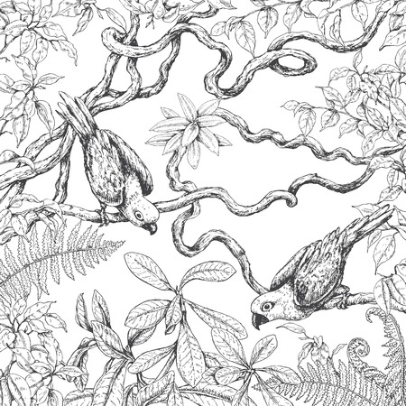 Hand drawn branches and leaves of tropical plants. Monochrome parrots sitting on liana branches. Black and white coloring page for adult. Vector sketch. 向量圖像