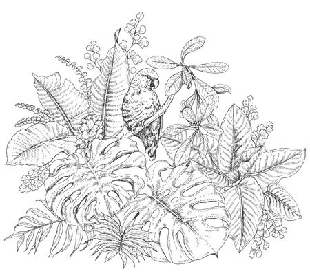 eden: Hand drawn branches and leaves of tropical plants. Monochrome floral bunch with bird.  Parrot sitting on branch. Black and white coloring page for adult. Vector sketch.