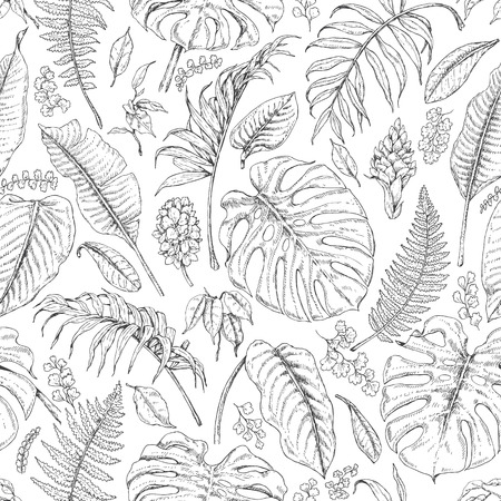 Hand drawn branches and leaves of tropical plants. Monochrome  floral pattern. Monstera, fern, palm fronds sketch. Black and white seamless texture.