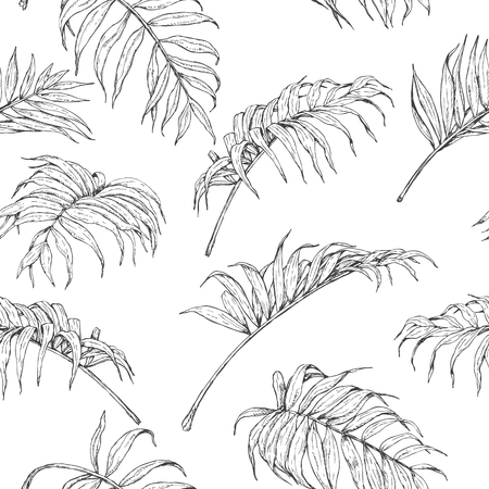 Dibujado A Mano Las Ramas Y Las Hojas De Las Plantas Tropicales ...