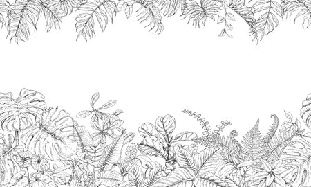 Hand drawn branches and leaves of tropical plants. Black and white seamless line horizontal texture. Monochrome  doodle  floral pattern. Vector sketch. Illustration