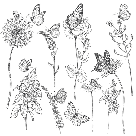 Hand drawn set of butterflies, bees and wildflowers. Illustration