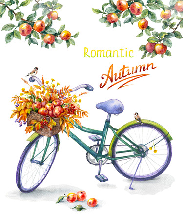 Hand drawn illustration of bicycle with basket ripe red apples.  Watercolor sketch of green bike, sitting goldfinches, apple tree branches.  Autumn background. Inscription Romantic Autumn.