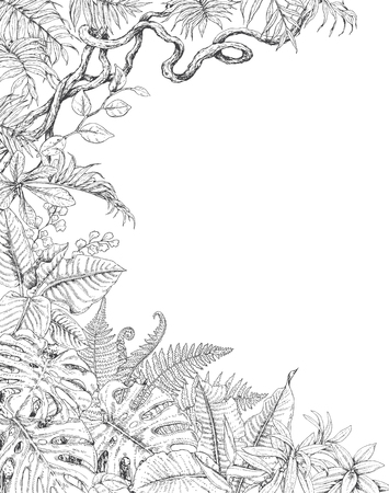 Hand drawn branches and leaves of tropical plants. One sided tropic  background with space for text. Monstera, fern, palm fronds, liana sketch. Black and white illustration coloring page for adult.