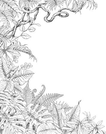Hand getrokken takken en bladeren van tropische planten. Eenzijdige tropische achtergrond met ruimte voor tekst. Monstera, varen, palmbladen, Liana schets. Zwart-witte illustratie kleurende pagina voor volwassene. Stock Illustratie