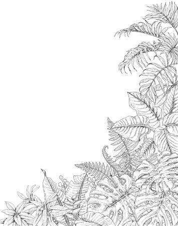 Dibujado A Mano Ramas Y Hojas De Plantas Tropicales. Fondo Trópico ...